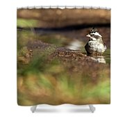 Black-crested Finch Shower Curtain
