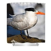 Black Crested Gull Shower Curtain