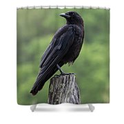 Black Crow Pearched On A Post Shower Curtain