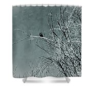 Black Crow White Snow Shower Curtain