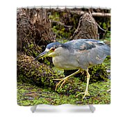 Black Crown At Six Mile Shower Curtain