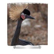 Black Crowned Crane 1 Shower Curtain