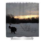 Black Dog Exploring Snow At Dawn Shower Curtain