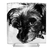 Black Dog Looking At You Shower Curtain
