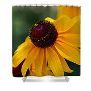 Black Eye Susan Shower Curtain