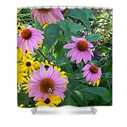 Black Eye Susans And Echinacea Shower Curtain