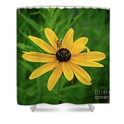 Black Eyed Susan And Friends Shower Curtain