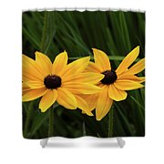 Black-eyed Susan Blossoms Shower Curtain