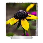 Black Eyed Susan Delight Shower Curtain
