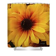 Black Eyed Susan Medley V3 Shower Curtain