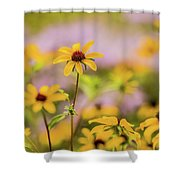 Black Eyed Susan Sunflowers In Field Shower Curtain