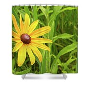Black Eyed Susan V Shower Curtain