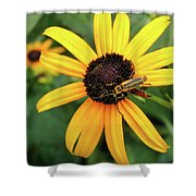 Black-eyed Susan With Soldier Beetle  Shower Curtain