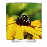 Black Eyed Susan With Wasp Shower Curtain