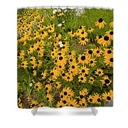 Black Eyed Susans-1 Shower Curtain
