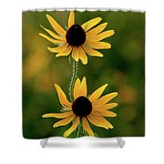 Black Eyed Susans 3276 H_2 Shower Curtain