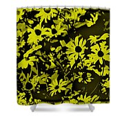 Black Eyed Susan's Shower Curtain