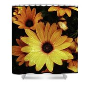 Black Eyed Susans. Looks Like They're Shower Curtain