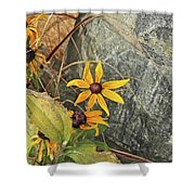Black Eyed Susans Next Gray And Black Rock Fading Foliage Green 2 10222017 Colorado Shower Curtain