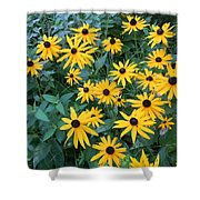 Black Eyes Of The Sun Shower Curtain by Carrie Viscome Skinner