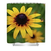 Black Eyes Susan And Friend Shower Curtain