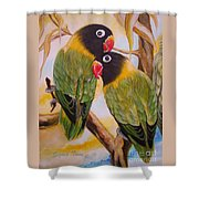 Black Faced Love Birds.  Chloe The Flying Lamb Productions  Shower Curtain