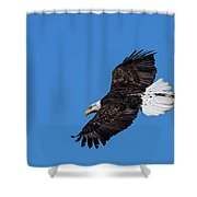 Black Feather Bald Eagle Shower Curtain