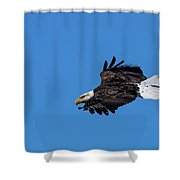 Black Feather Eagle Hunting Shower Curtain