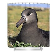 Black Footed Albatross Shower Curtain
