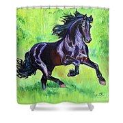 Black Friesian Horse Shower Curtain
