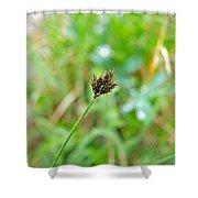 Black Grass Shower Curtain
