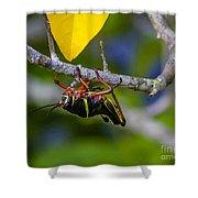 Black Grasshopper Shower Curtain