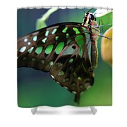 Black Green Tailed Jay 2 Shower Curtain