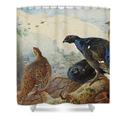Black Grouse And Gamebirds By Thorburn Shower Curtain