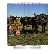 Black Horses With Sulky Plow Two  Shower Curtain