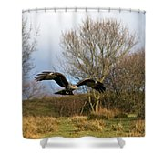 Black Kite Shower Curtain