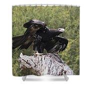 Black Kite Shower Curtain