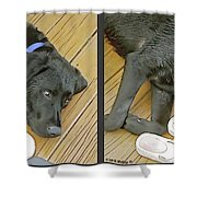 Black Lab - Gently Cross Your Eyes And Focus On The Middle Image Shower Curtain