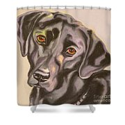 Black Lab Aint No Cure For Love Shower Curtain