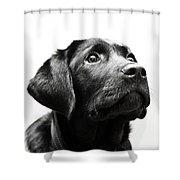 Black Labrador Retriever Potrait Shower Curtain