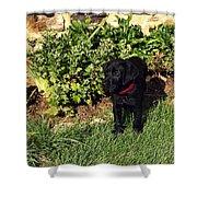 Black Labrador Retriever Puppy Shower Curtain