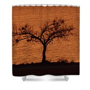 Black Lace Tree Shower Curtain