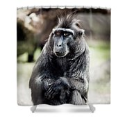 Black Macaque Monkey Sitting Shower Curtain