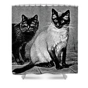 Black Manx And Siamese Cats Shower Curtain