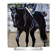 Black Morgan Horse Hunter Jumper Shower Curtain