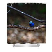 Black-napped Monarch Shower Curtain