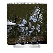 Black Neck Swan In Review Shower Curtain