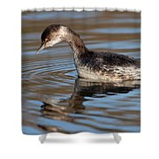 Black-necked Grebe About To Dive Shower Curtain