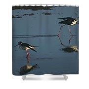 Black-necked Stilts - California Central Coast Shower Curtain
