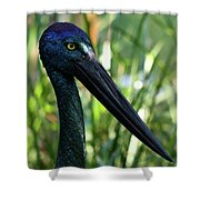 Black Necked Stork 1 Shower Curtain